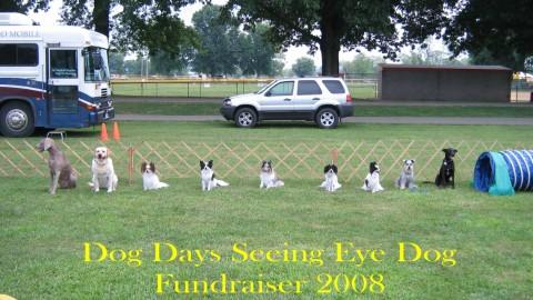 Dog Days 2008